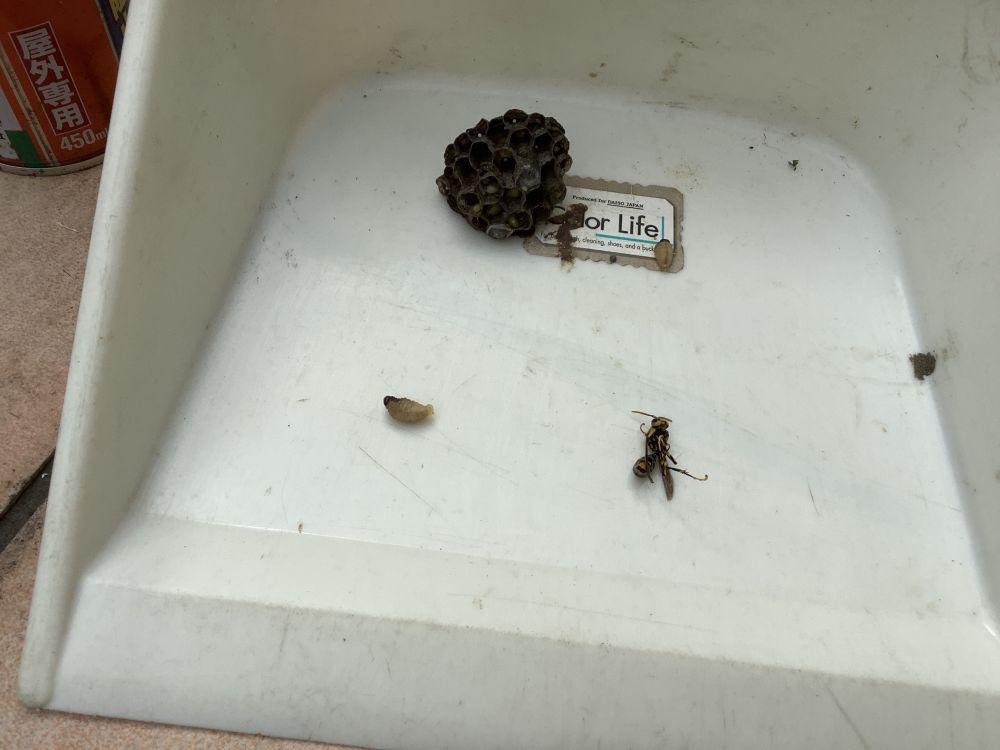 蜂の巣除去 空き家管理 (2)