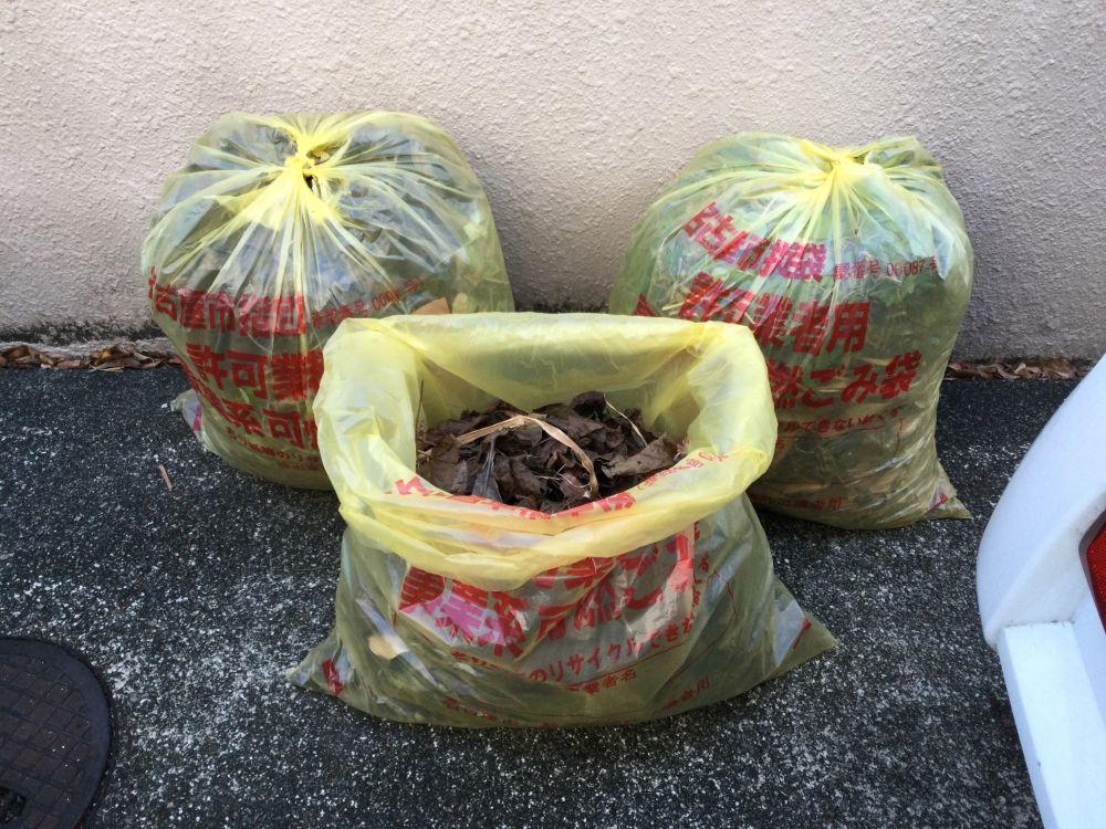 空き家管理 落ち葉 草取り作業 (1)