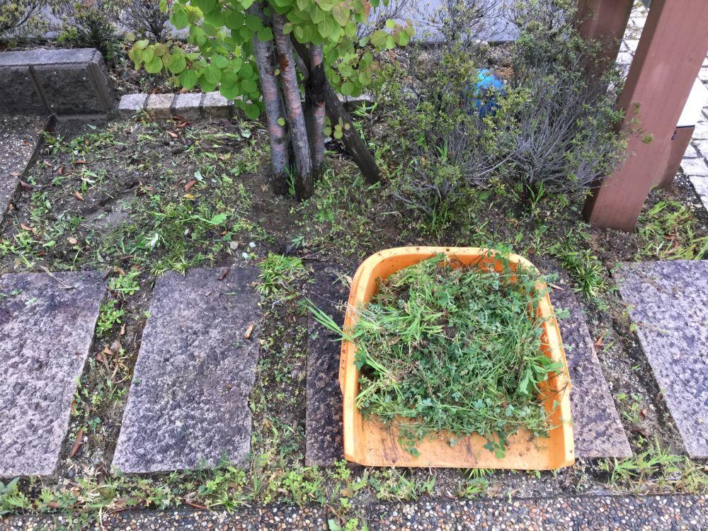 草取り 空き家管理 (1)