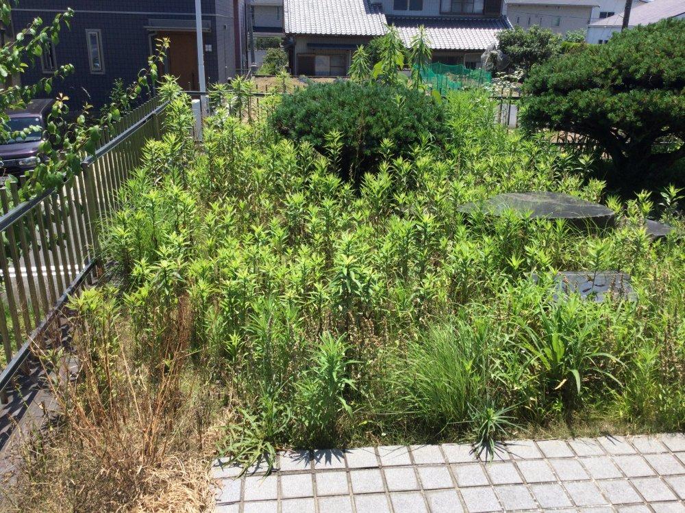 日進市 草刈り (4)