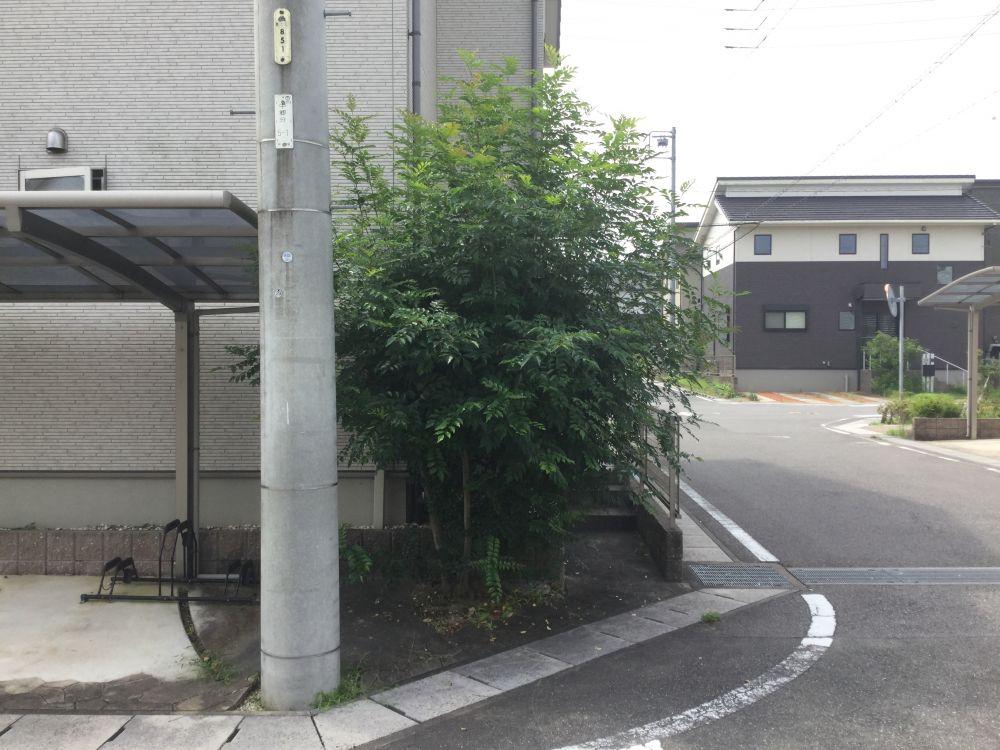 枝切り (1)