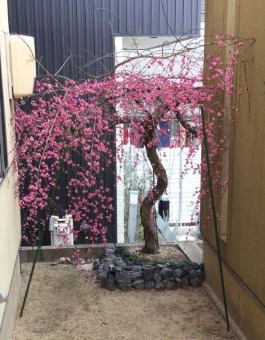 空き家管理 報告書 植木の様子