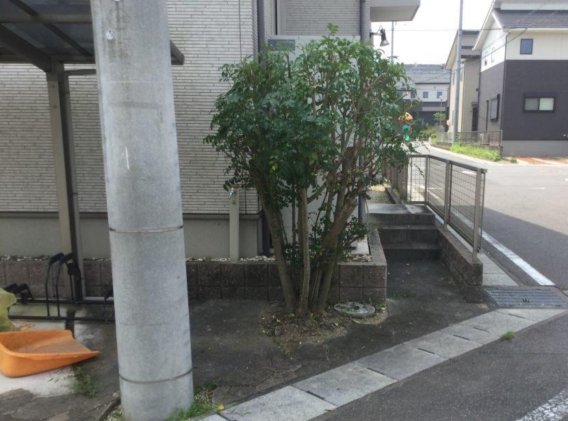 枝切り (2)