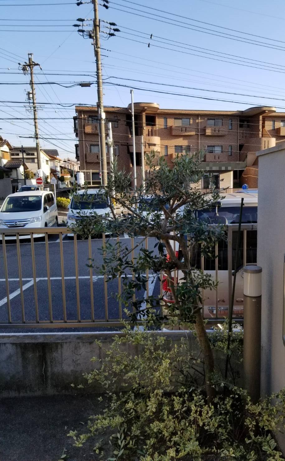 名東区 木の剪定 (1)
