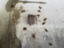蜂の巣除去