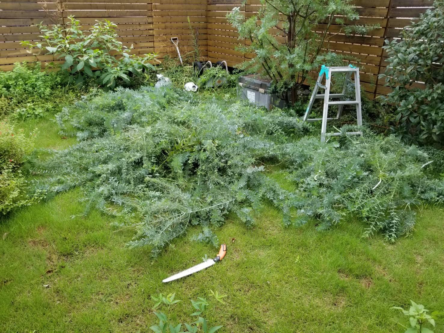 空き家管理 庭木の枝切 (6)