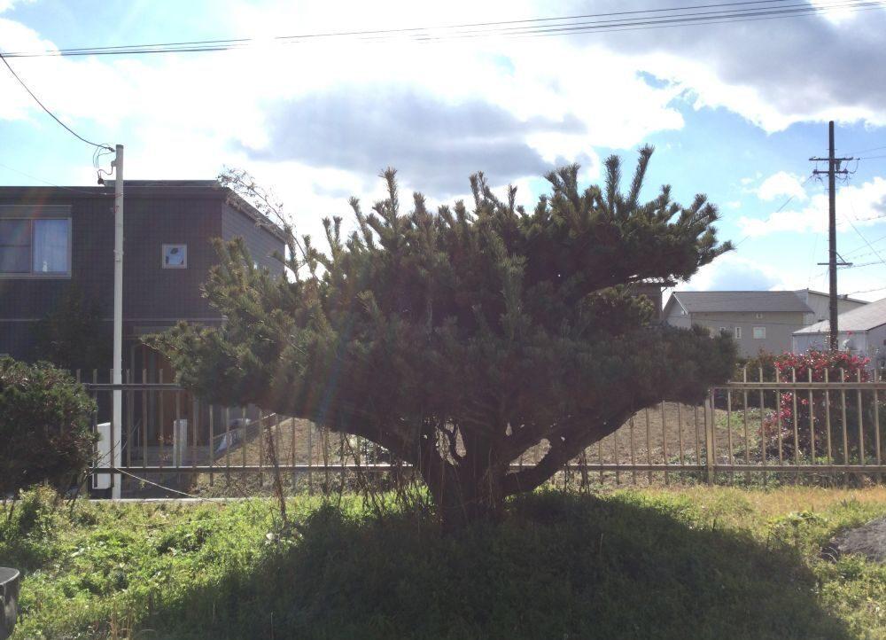 日進市・庭木カット2