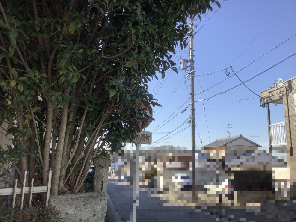 空き家管理 庭木の枝切り (2)