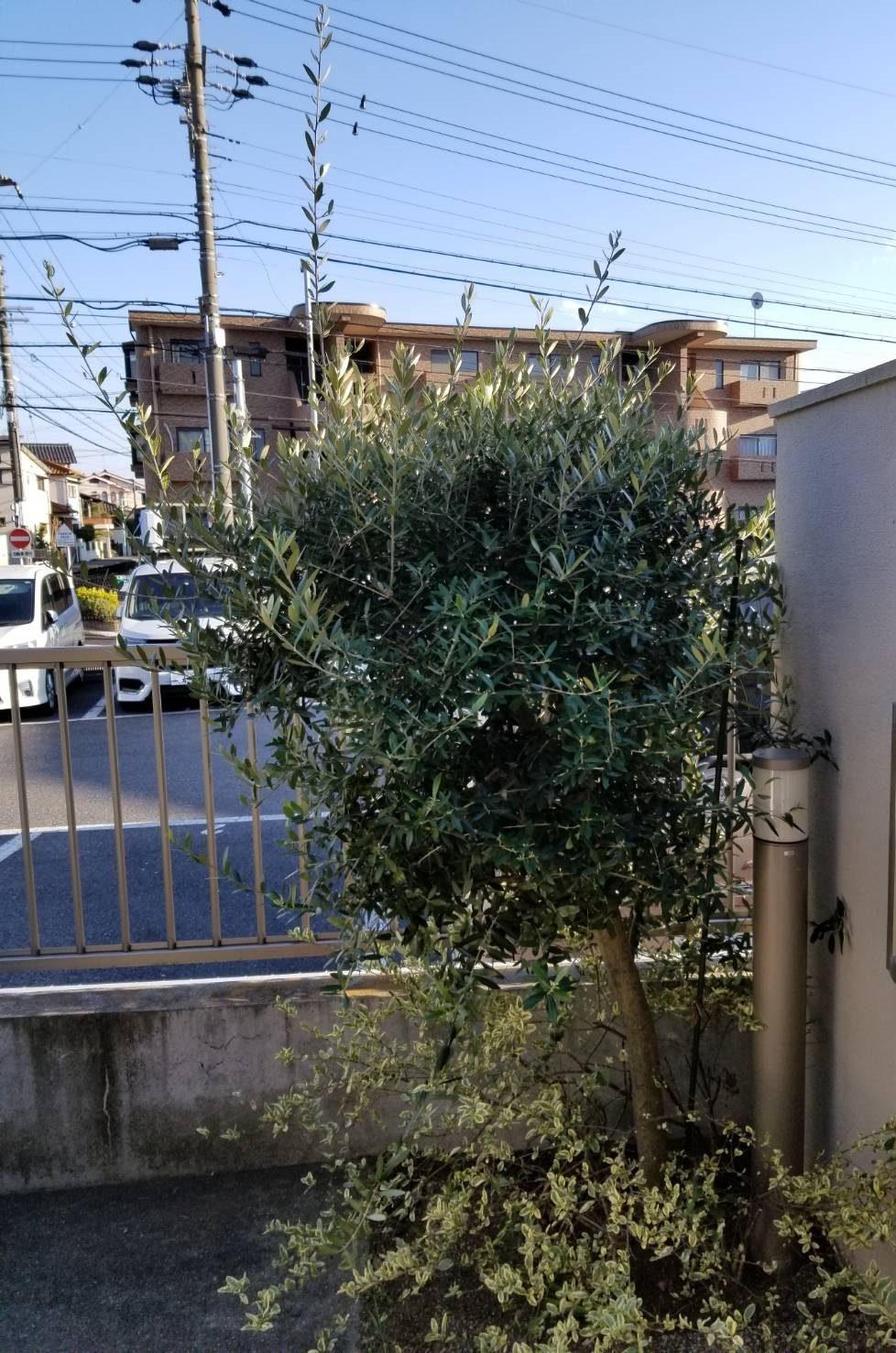 名東区 木の剪定 (2)