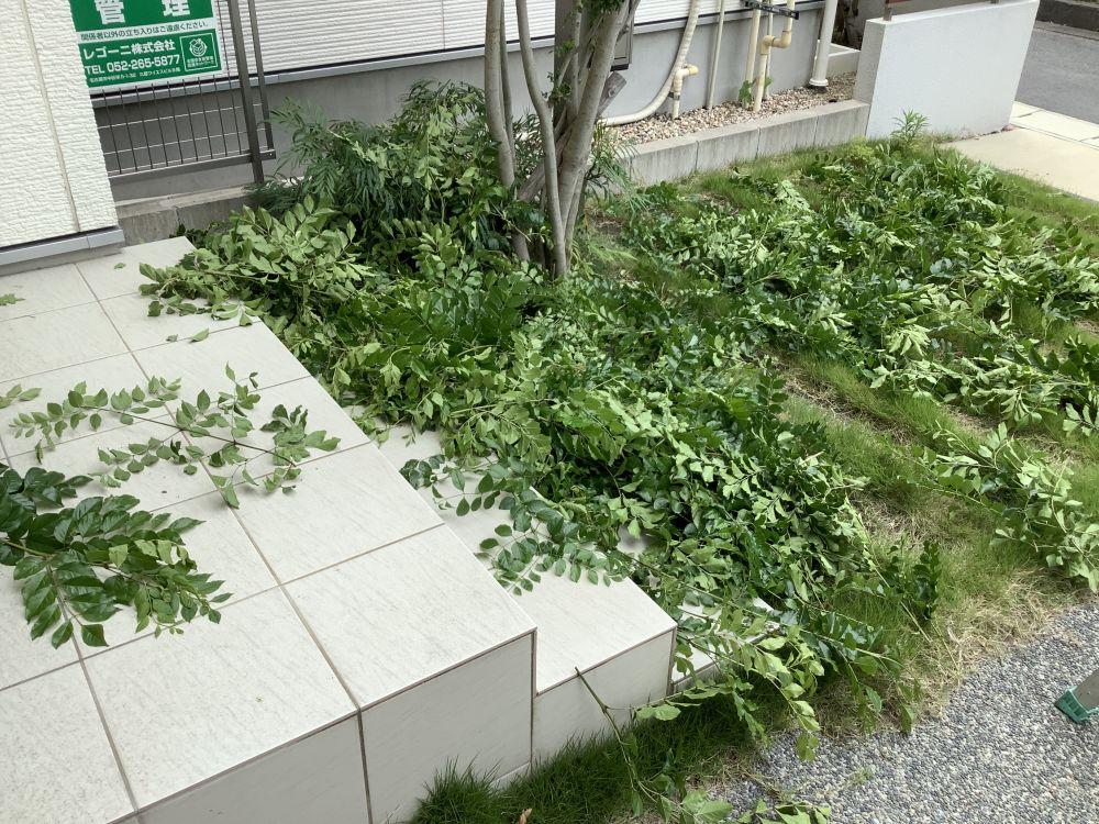 剪定 (5)