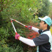 愛知県の空き家管理、剪定や草刈り作業