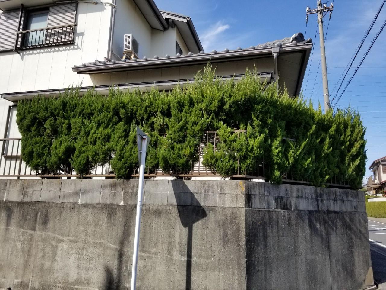 20200220 空き家管理 剪定 (4)