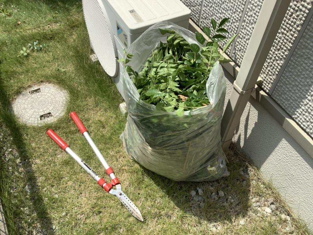 枝切り作業 (2)