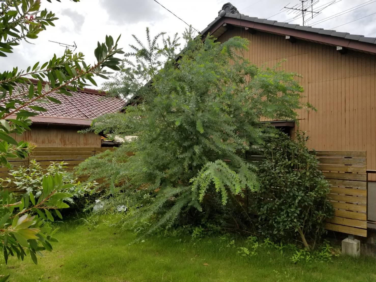 空き家管理 庭木の枝切 (2)