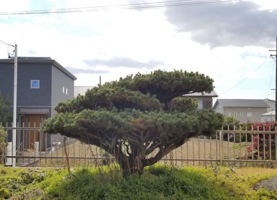 日進市・庭木カット_210209_1
