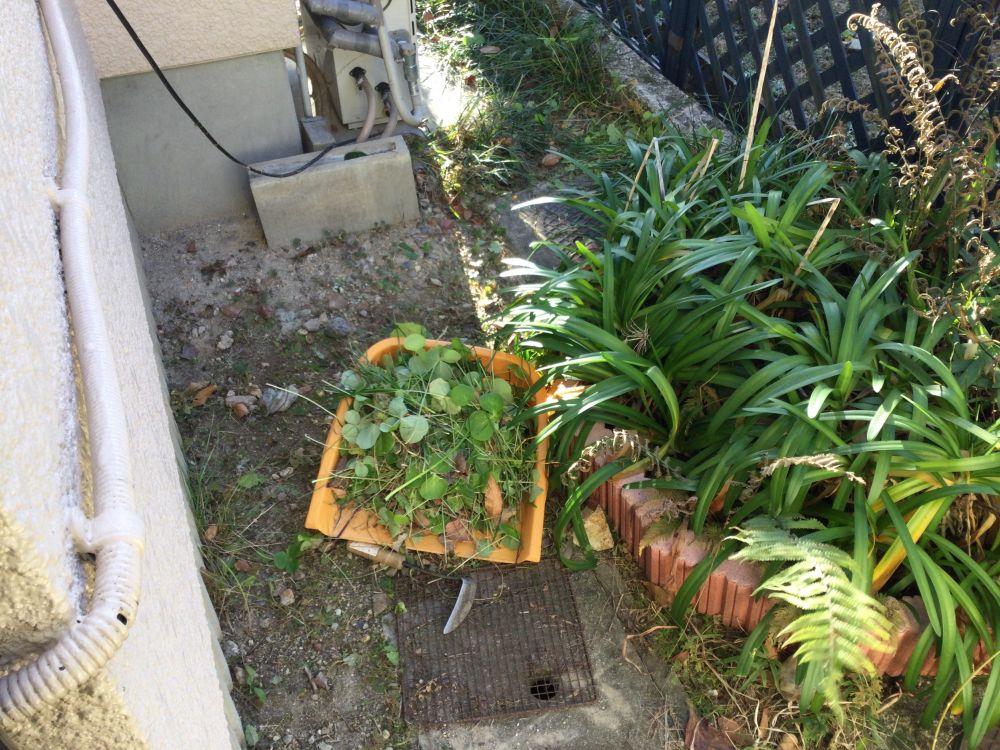 空き家管理 落ち葉 草取り作業 (2)
