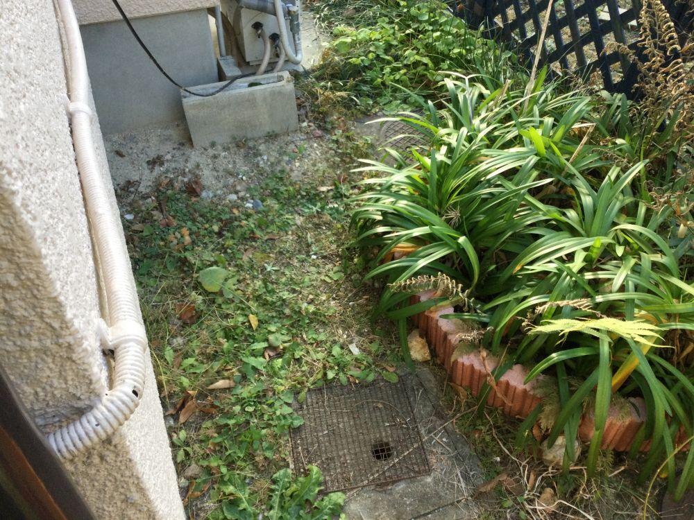 空き家管理 落ち葉 草取り作業 (3)