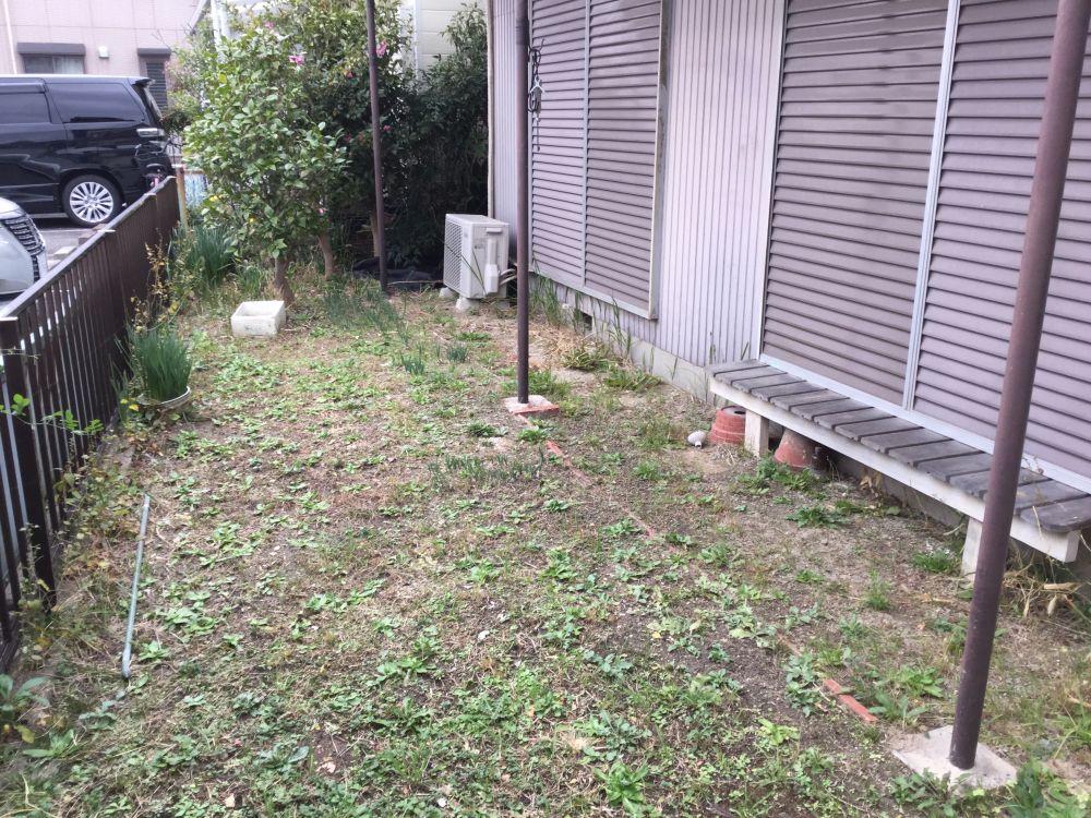庭木の様子 (2)