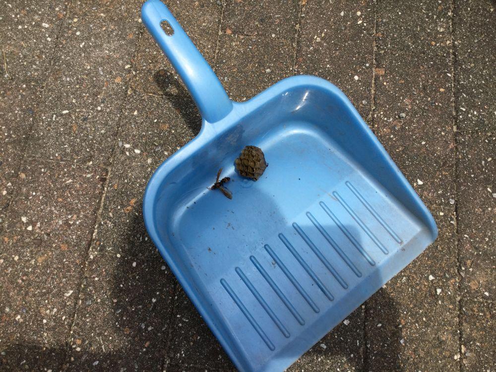 知多市 蜂の巣除去 空き家管理 (2)