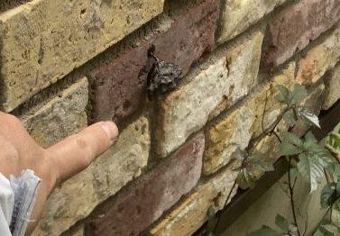 蜂の巣除去 空き家管理 (1)